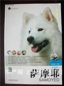 萨摩耶-家有爱犬系列