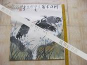 名家画 常永明作品 【 洞庭来客 鸟】长49厘米 宽45厘米