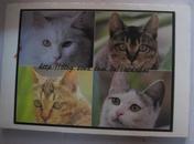 明信片( 猫  ) 大白主人拍摄   12张