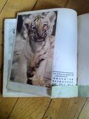 上海人美《美术丛刊》1983年23期