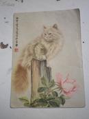 《60年历片 》曹克家  猫画