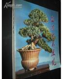 盆景艺术展览(为了庆祝中华人民共和国成立三十周年)画册