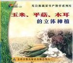 玉米平菇的播种与管理,平菇玉米立体种植视频