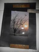 【天津美院流出】获奖巨幅摄影照片 粘贴在展览板上 之一 枯藤老树昏日