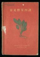 1960年老版【常见野菜图谱】草纸本 整本彩图 品不错