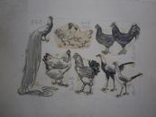 名人画鸡    20种  出版过
