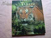 画册:Tisers 老虎画册【外文版】144页
