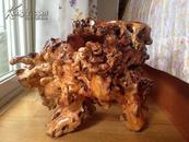 狗骨头木天然根雕一(自然造型,有上清漆)