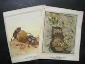 50-60年代老教学画片:绘画版昆虫(2张)