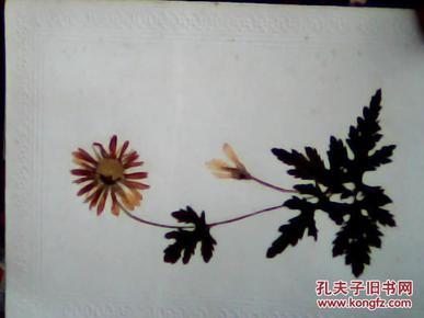 植物粘贴画