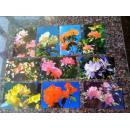 108、《大理杜鹃》9张一套全,大理市花就是杜鹃。,9枚套,9品。