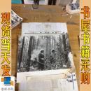 黑白照片   大兴安岭林业工人用 机械除草 剪枝  照片右下角破损