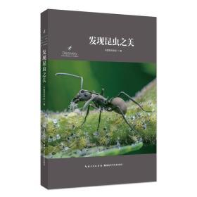 发现昆虫之美