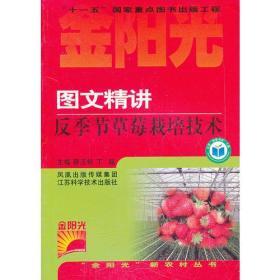 图文精讲反季节草莓栽培技术