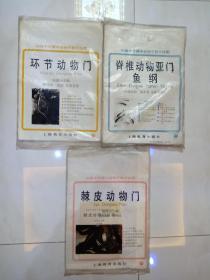 环节动物门7幅+脊椎动物亚门鱼纲16幅+棘皮动物门6幅全