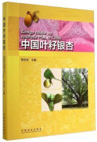 中国叶籽银杏