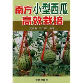 南方小型西瓜高效栽培