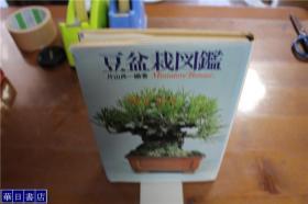 豆盆栽图鉴  小品盆栽   片山贞一  约32开   品好包邮