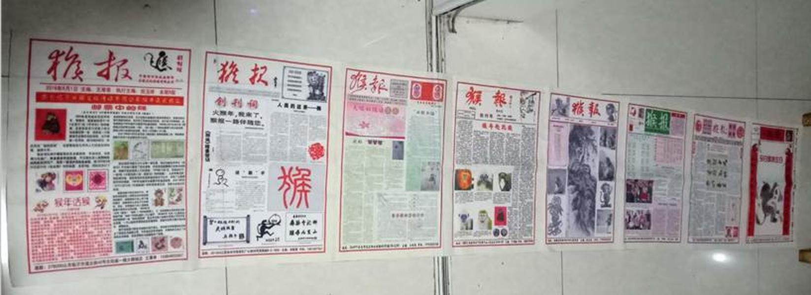 丝绸报:猴报8连体