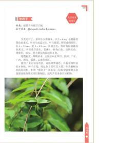常见野果200种