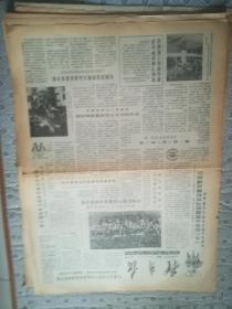 体育报 第2716期  1984年10月15日