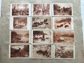 民国法国明信片:狼、麋鹿、野猪、猎狗等动物画12张一组(绘画版),M063