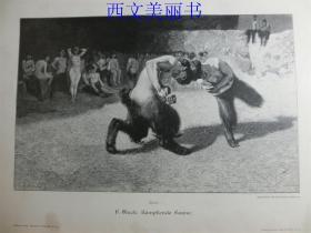 【百元包邮】1890年木刻版画《战斗》(Kämpfende Faune) 尺寸约41*28厘米(货号 M2)