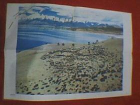 王修明主编的彩色图片:青藏高原牧场(此为对开画。宽76厘米,高52厘米;表现了青藏高原上远处山峦起伏、进出湖水清澈、肥水绿草滋养着湖边大片牛羊的生动场景;印刷品;原为教学挂图)