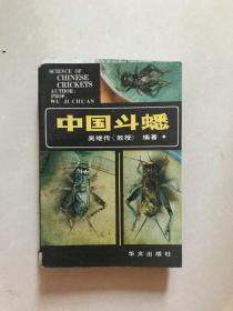 中国斗蟋 B3