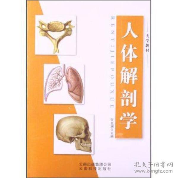 人体解剖学