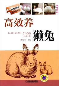 高效养獭兔-双色印刷