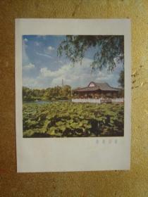 插图散页    南湖公园   36开大小纸本1张
