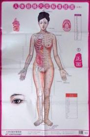 人体经络穴位标准挂图:女性