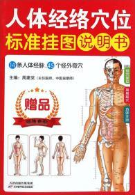 人体经络穴位标准挂图(男性)