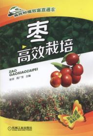 枣高效栽培