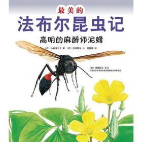 最美的法布尔昆虫记:高明的麻醉师泥蜂