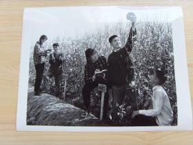 超大尺寸:1976年 江西共产主义劳动大学高安分校,农业班学生在培育高产油菜