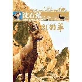 沈石溪动物小说大PARTY:红奶羊(儿童小说)