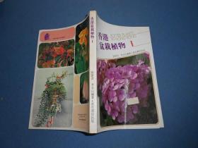 香港盆栽植物1