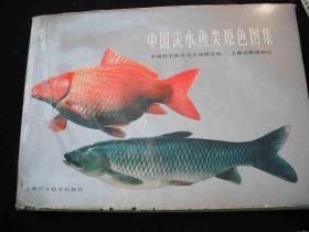 1982年出版的----16开精装大本----彩色图片--【【中国淡水鱼类原色图集】】----稀少
