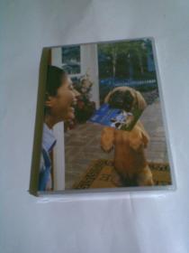 爱犬喂养,护理与训练(盒装DVD光盘,新未开封)