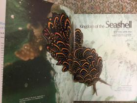 Kingdom of the Seashell贝壳王国,1975大开本布面精装,250余幅绝美插图,九品强,孔网唯一,值得收藏