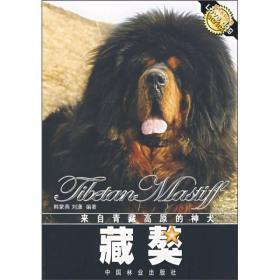来自青藏高原的神犬:藏獒