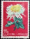 特44菊花(18-14)红22分原胶全新上品