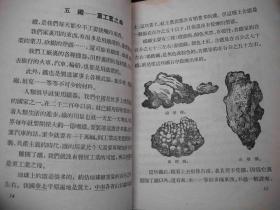 1956年出版的---知识书--【【地下宝藏】】---少见