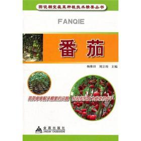 图说棚室蔬菜种植技术精要丛书:番茄