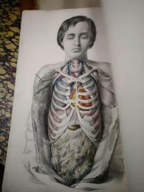 巨型本:54*37厘米开本,西方医学经典《人体内部器官构造,移植、诊断等等》1869年,几十幅手绘彩色铜版画,
