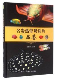 名贵热带观赏鱼品鉴