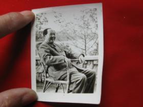 老照片毛主席坐腾椅1枚. 背景树新