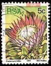 外国邮票-南非1977年发行【铁树开花卉】好信销邮票